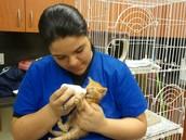 Veterinary Assistants