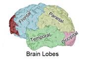TJs Biomedical Imaging - Trial Graphics