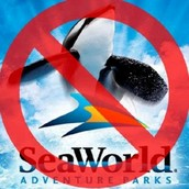 In the movie Blackfish, Gabriela Cowperthwarte is succssful in showing how captivity is terrble for whales by having former Seaworld trainers give their expeienes and by providing facts about whales in captivity and in the wild.
