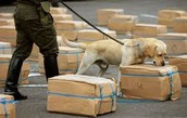 dogs smelling out bombs