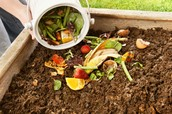 What should I put in my compost bin?