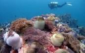 Malaysia's Coral Reefs