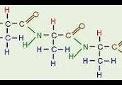 Break Down of Protein