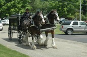 Horse-Drawn Funeral Hearse Carriage...
