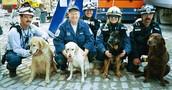 Ground Zero Dogs