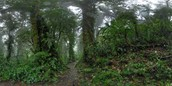 Santa Elena Rain Forest