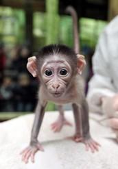 Monkey-around