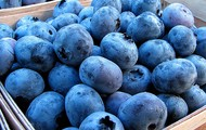 Blueberries frescos