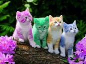 Cute rainbow kittens
