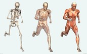 What is A Body System?