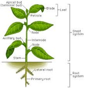 Plants have many different parts