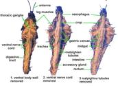 Internal View of Grasshopper