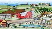 farms animil