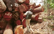 How loggers track trees