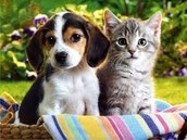 Are cats loyal like dogs?