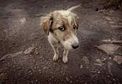 Adoptè a un perrito