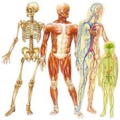 Skeletal, Muscular, digestive, circulatory, respiratory, and nervous