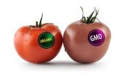 What is GMF/GMO