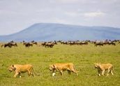 The Serengeti Plain