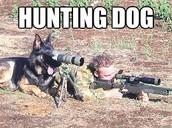 COMPANION DOGE