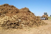 Wood Pulp (wood chips)
