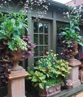 Spectacular, Easy to Maintain Container Gardens