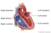 the 4  Chambers of the heart