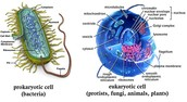 Comparing Eukaryotes and Prokaryotes