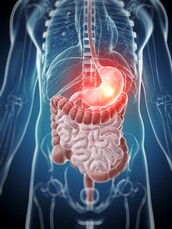 The Digestive System Week 6