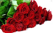 These are Roses