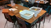 Mr. Venables 5th Grade Science
