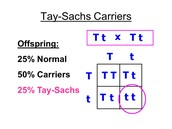Chances of having Tay-Sachs