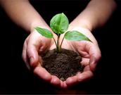 Nourishes Plant Life