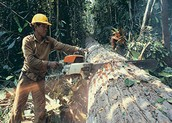 The challenges of the Deforestation- http://ec.europa.eu/environment/forests/pdf/conf_26_05_2014/summary.pdf