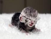 Two headed kitten