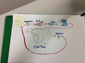 Food Chain of the Beluga