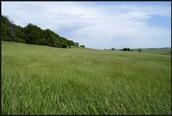 Nice Green Grassland