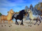 Jorvik Pony
