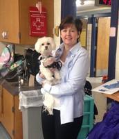 Meet Our Classroom Service Dog