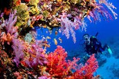 What Are Coral Reefs ?