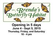 Visit Brenda's Butterfly Habitat