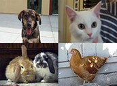 All Animals can Be Euthanized!!!