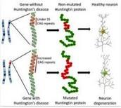 The Chromosomes