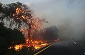 כיצד האדם השפיעה על השריפה?