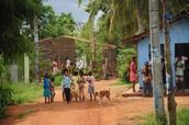 Sri Lanka Service Tour