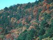 Hills of the Piedmont Region