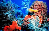 This is a picture of a coral reef.