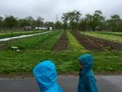 Planting field