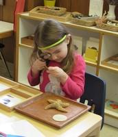 Inspecting an Echinoderm