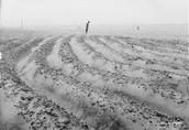 Dusty farm